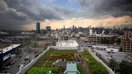 Urban_Farming_NYC.jpg